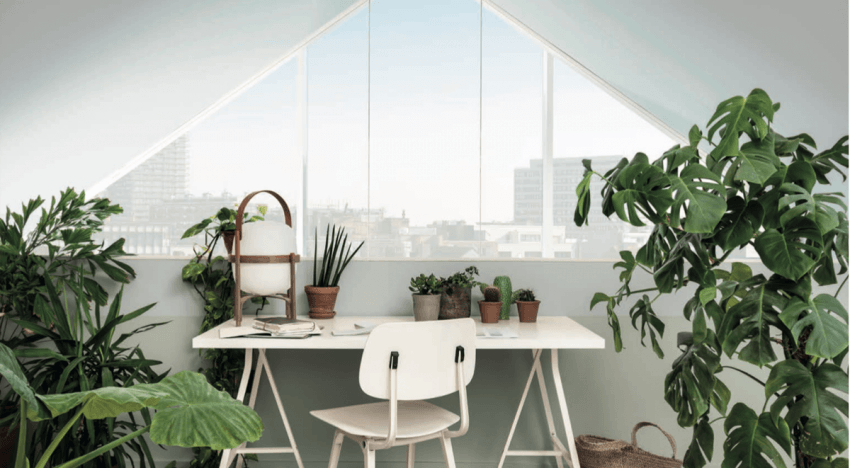 HOUSEPLANTS FOR AIR PURIFICATION